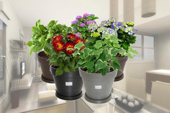 Chậu hoa gỗ nhựa – Nhựa Việt Pháp và lợi ích của việc trồng cây trong nhà